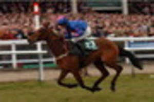 leading hope cue card ruled out of cheltenham gold cup